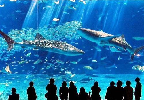 壁纸 海底 海底世界 海洋馆 水族馆 桌面 500_349